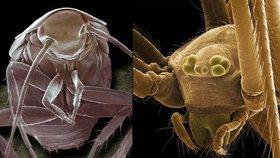 V obavách ze štěnic, roztočů a podobných potvor pravidelně uklízíte? Zbytečně. Tyhle krvelačné hmyzáky stejně máte doma!