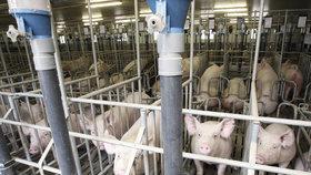 Výkupní ceny vepřového jsou podle chovatelů prasat nízké. Maso z dovozu je navíc prý dotované, což českým zemědělcům vadí.