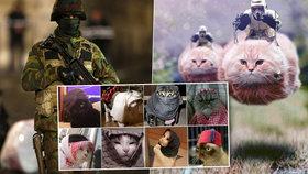 Belgičané během protiteroristického zásahu v Bruselu zaplavili internetovou komunikační síť Twitter fotografiemi a krátkými videi koček.