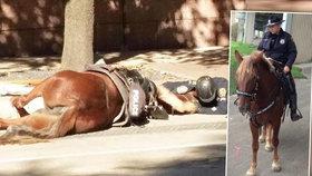 Zdrcený policista objímal svého umírajícího koně.