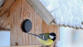Ptáci jsou na zimu za krmítka vděční.