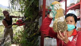 Palmové plantáže, palmové plody, palmový olej... Jeden velký a nebezpečný byznys