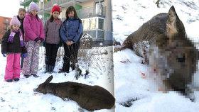 Děti na Plzeňsku viděly krvavý konec srnky. Zabil ji pes.