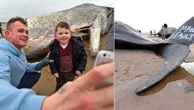Mrtvoly velryb přilákaly na pobřeží stovky zvědavců.