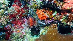 Zvyšující se teplota vody přispívá k bělení Velkého bariérového útesu, tedy vymírání korálů.