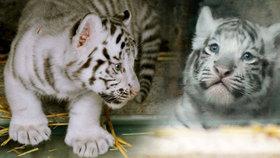 Mláďátka v Zoo Liberec se mají k světu! Podívejte se na jejich první snímky.