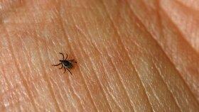 Klíšťata přenášejí řadu infekcí.