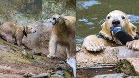 Lední medvědici Coře (17) a její půlroční dceři Norii jde o zdraví, ne-li o život. A mohou za to návštěvníci, kteří je mohou zabít svou nepozorností a tím, že i úmyslně dělají z jejich výběhu smeťák.