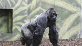 Výběhy zvířat jsou většinou zabezpečeny před vniknutím návštěvníků například ploty, skly nebo vodními bariérami.