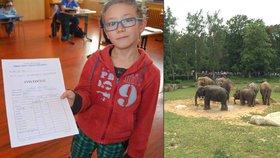 Máte 1 z přírodovědy? Ve čtvrtek můžete za korunu do pražské zoo.