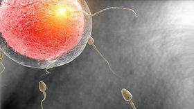 """""""Civilizované"""" spermie chřadnou a my to nemůžeme ovlivnit, říká lékař."""