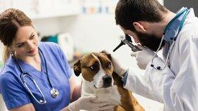 Před odjezdem je třeba navštívit veterináře.