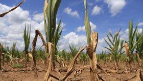 O případné pomoci suchem postiženým farmářům ze strany vlády v Berlíně chce ministryně zemědělství Julia Klöcknerová rozhodnout teprve koncem srpna po sklizni.