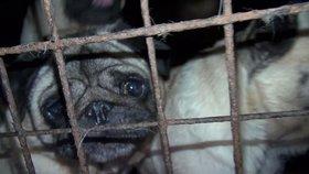 Za týrání zvířat by ve Velké Británii nově mělo padat pět let vězení