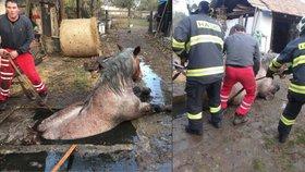 Video: Dramatická záchrana koně z jímky - vytahovat ho musel jeřáb!