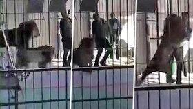 Lev v egyptském cirkuse napadl cvičitele.