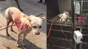 Nebohého psa střelili kvůli masu dvěma šípy.