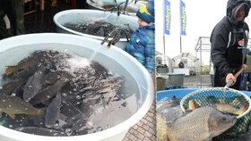 Ministerstvo financí chce rozšířit materiál o osvobození od elektronické evidence tržeb (EET) o předvánoční prodej ryb.
