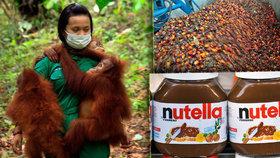 Palmový olej škodí zdraví i životnímu prostředí. V Itálii jej začaly bojkotovat supermarkety.