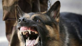 V Indii žijí miliony toulavých psů, kteří jsou k vidění i na ulicích těch nejluxusnějších čtvrtí. Od listopadu roku 2017 do května 2018 zabili  v severní Indii celkem 12 dětí. (Ilustrační foto)