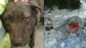 Krutý majitel praštil psa do hlavy, strčil do pytle a zakopal do hromady sněhu.
