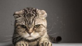 5 tipů, jak poznat, že bydlíte u své kočky