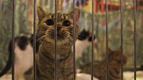 Kočky z útulků doufají v nový domov: Najdou štěstí na Černém Mostě?