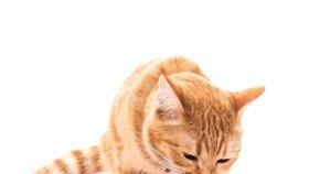 O kotě se musíte umět dobře postarat.