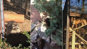 V zookoutku v Malé Chuchli najdete trvale hendikepovaná zvířata, která se do přírody už nevrátí.
