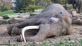 Slon africký spí jen dvě hodiny denně.