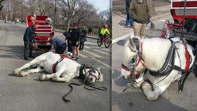 Kůň Max padl na ulici vyčerpáním.