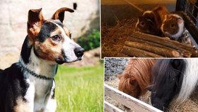 Každý rok stát získá několik desítek zvířat.