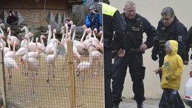 Případ brutálního ubití plameňáka v jihlavské zoo malými gaunery (5, 6 a 8) stále šokuje Česko. Budou výtržníci nějak potrestáni?