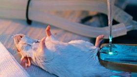 I takto může vypadat testování na zvířatech. (Ilustrační foto)