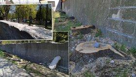 V Ďáblicích pokáceli 46 stromů podél zdi u hřbitova.