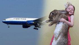 Obří králík Simon zemřel na palubě United Airlines poté, co ho zaměstnanci strčili na 16 hodin do mrazáku (ilustrační foto - Simonův otec Darius).