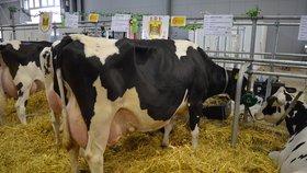 Nejkvalitnější mléko a výrobky z něj tudíž pochází z přísné ekologické produkce, kde skot žije v relativně přirozených podmínkách, konzumuje přirozenou stravu a není vystavena tak vysokým stresovým podmínkám jako ve velkochovech