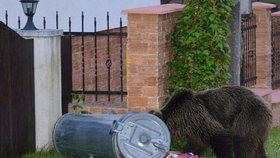 Medvědice bloudila městem.