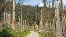 Ministerstvo zemědělství chce přispět na opravy cest, které se ničí kvůli odvážení kůrovcového dřeva.