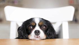 Čtyřnohý mazlíček je pro většinu Čechů moc velký luxus: Za psa průměrně utratíme 1077 korun.