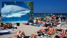 Na turistu na Ibize zaútočil žralok modrý. Zraněný muž skončil v nemocnici.