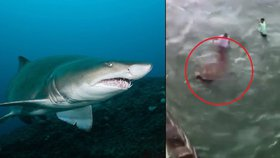 Žralok pokousal muži ruku poté, co ho zatahal za ocas.