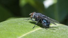 Moucha přenáší nemoci.