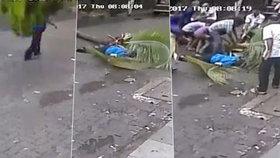 Smrt na videu: Moderátorku zabila padající palma, tragédii zachytily kamery