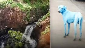 Po indické Bombaji se prohánějí modří psi.
