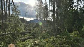 Některé turistické trasy v jižní části Národního parku Šumava zůstávají, po bouřce a silném větru z noci na sobotu 19. srpna, nepřístupné. Jedná se například o úseky Nové Údolí - Třístoličník - Plechý, Schwarzenberský plavební kanál - Plešné jezero - Jelení Vrchy nebo cyklotrasy v okolí Jeleních Vrchů a Stožce. Na snímku z 21. srpna jsou vyvrácené stromy nad Raškovem, v pozadí je hora Plechý.
