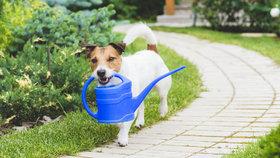 Pes na zahradě: Jaké rostliny jsou pro něj jedovaté a jak to udělat, aby ji neničil
