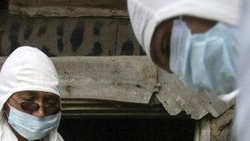Veterináři na Moravě vybijí 65 000 slepic kvůli salmonele.