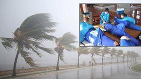 Z Kuby kvůli hurikánu evakuovali delfíny.