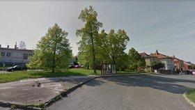 Na Násirově náměstí v Modřanech se budou sázet nové stromy. Můžete si je adoptovat.